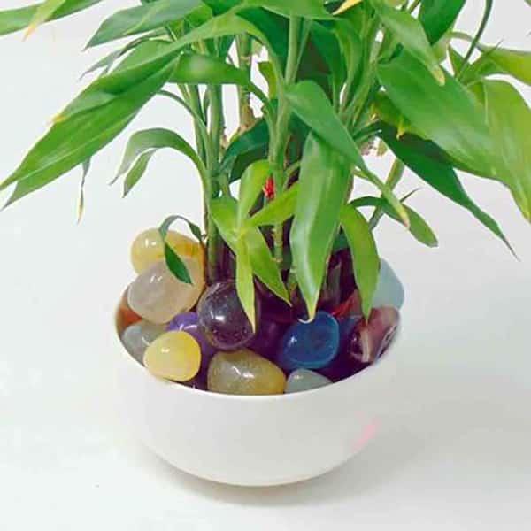 Glossy Onyx Multicolor Pebbles 500gm